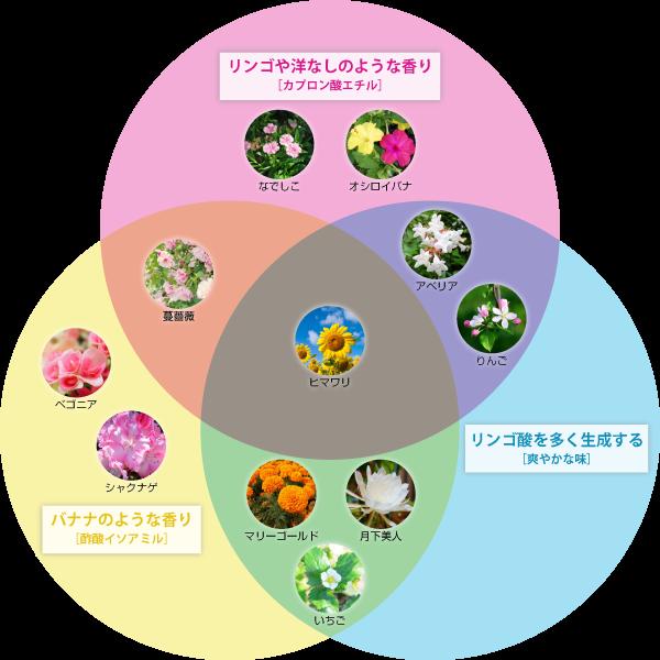 花酵母のフローチャート